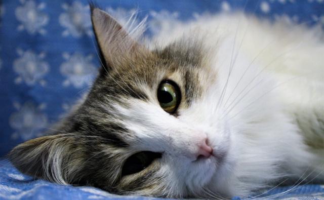Thumbnail for - Общежитие кошек